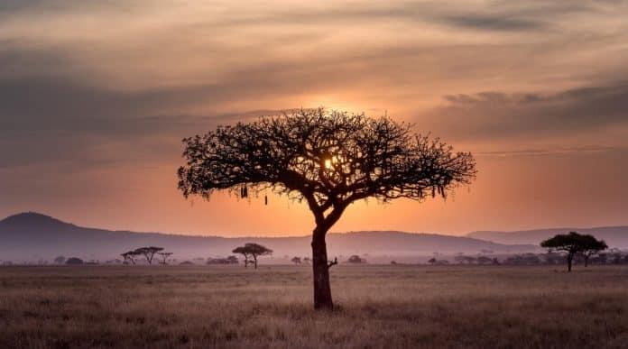 Tanzanie paysage
